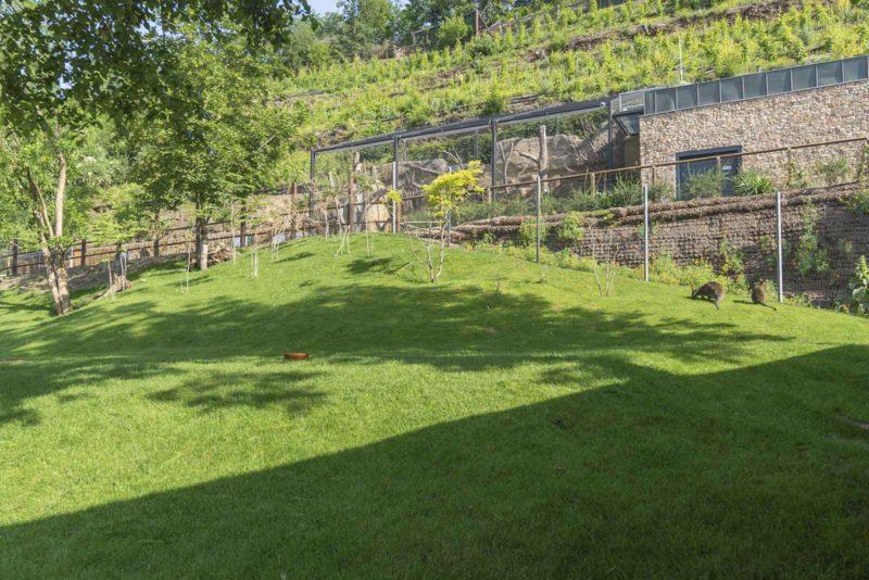 Zoologická zahrada hl. m. Prahy – Expozice australské fauny
