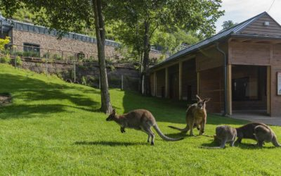 Prague Zoological Garden – the Exposition of Australian Fauna